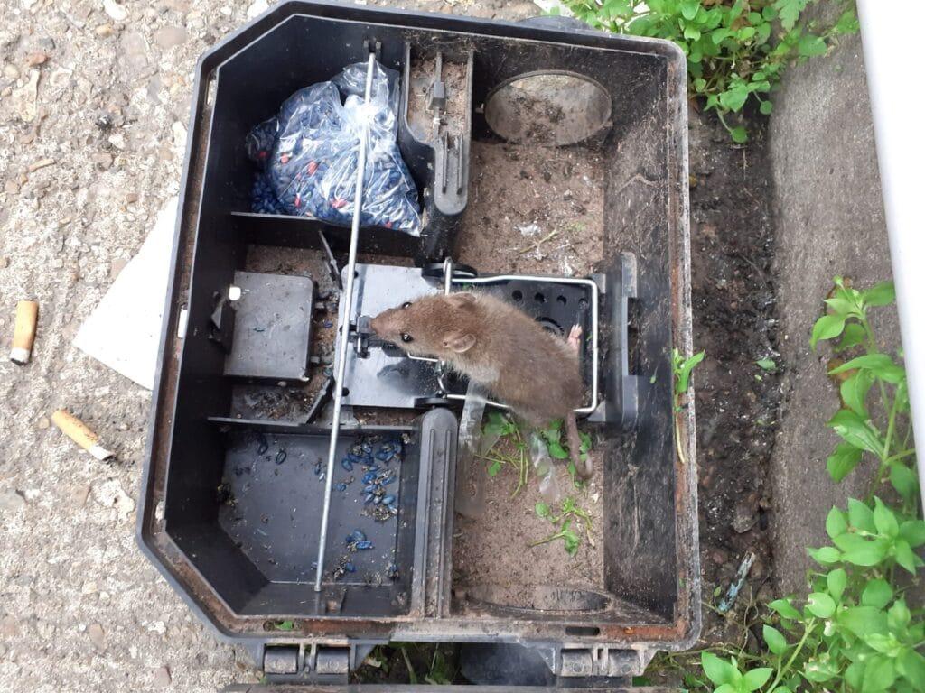 rat control box